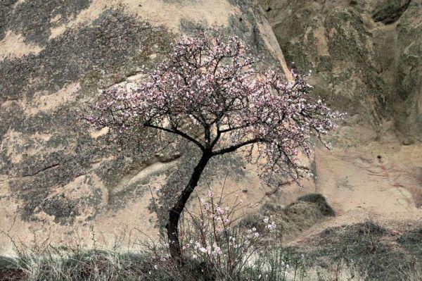 Cappadocia Blossom by Charlie Waite