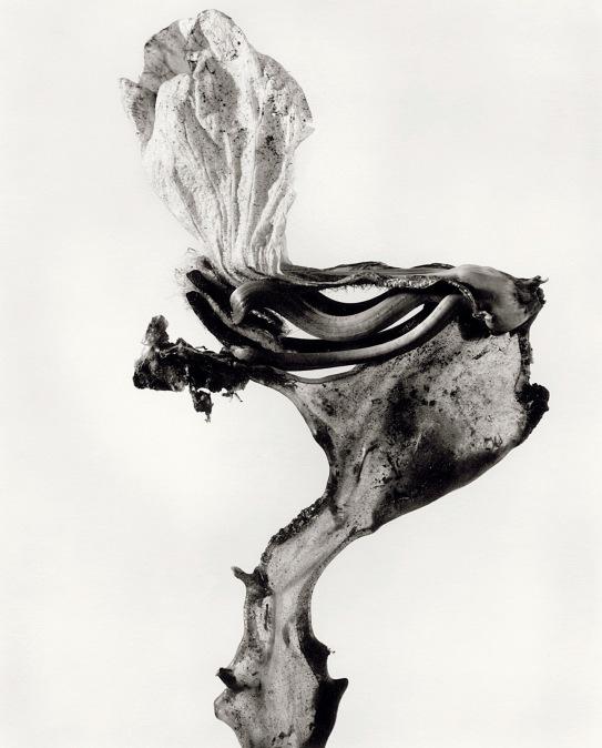 """""""Cercopithecus icarocornu"""", 1987 © Joan Fontcuberta & Pere Formiguera"""