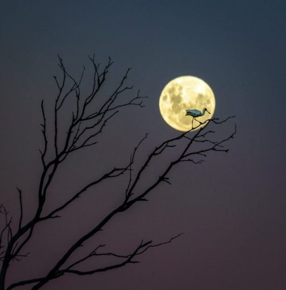 A Fork, a Spoon and a Moon, Photograph: Andrew Caldwell