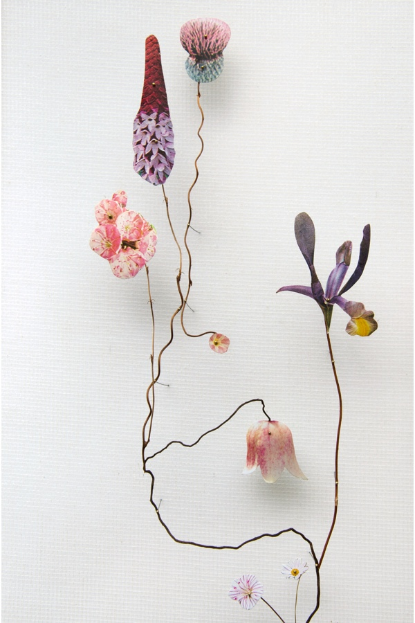 Anne Ten Donkelaar: From Flower Construction Series - Detail