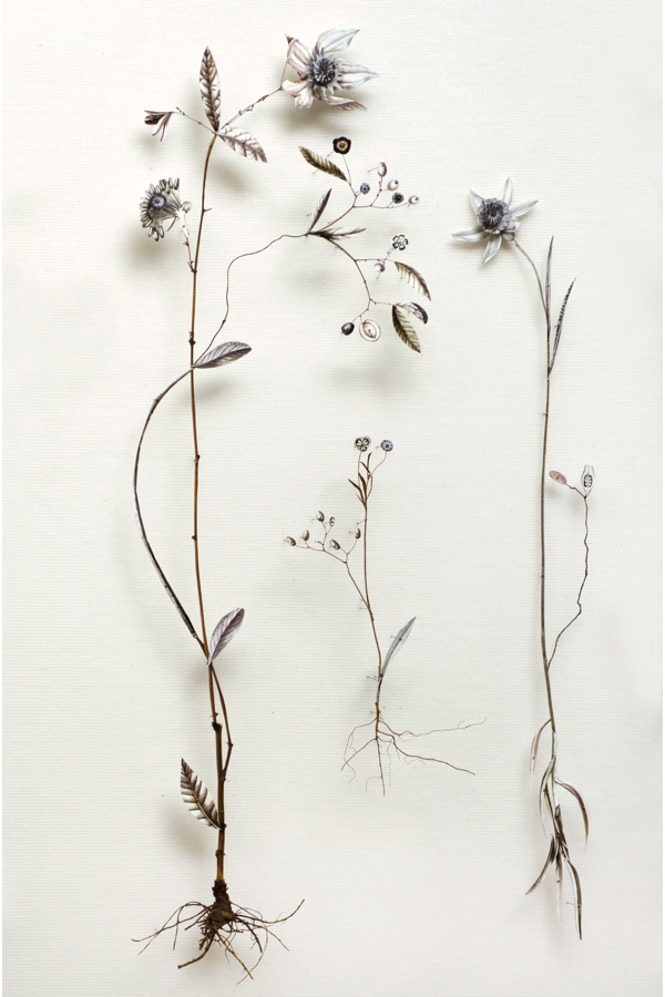 Anne Ten Donkelaar: From Flower Construction Series