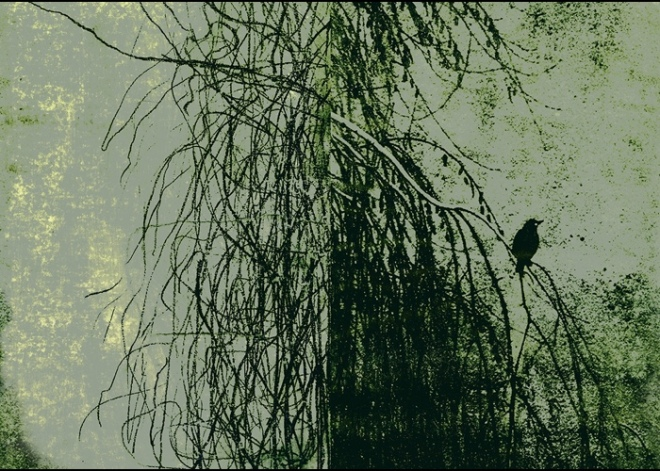 Wall&decò Wallpaper: Alba Salix 2018 - Green