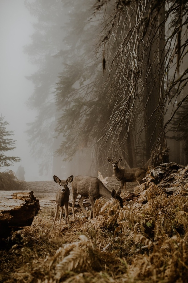 An Unexpected Meeting | © Justyna Zdunczyk, Poland, Winner, Open Wildlife and Winner, Poland National Award, 2018 Sony World Photography Awards