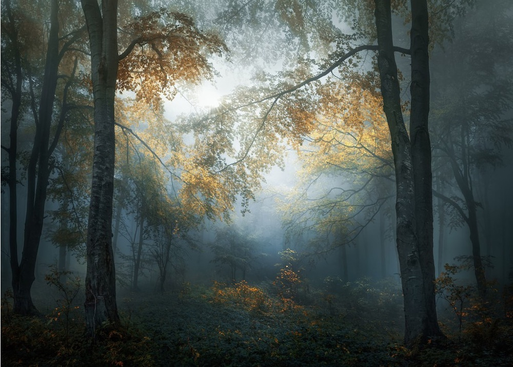 Early Autumn | © Veselin Atanasov, Winner, Open Landscape & Nature and Winner, Bulgaria National Award, 2018 Sony World Photography Awards