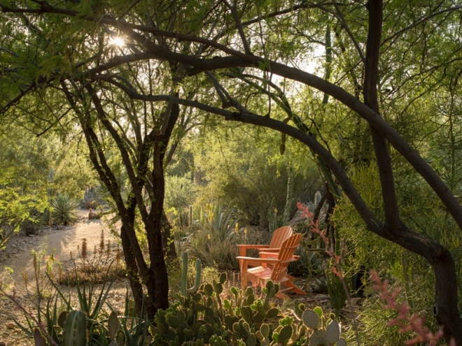 Image from: Desert Gardens of Steve Martino. Photography by Steve Gunther, courtesy of The Monacelli Press.