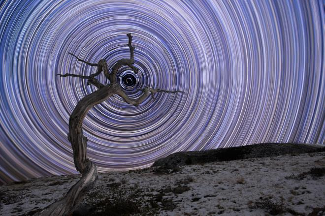 A weathered juniper tree in Montana's northern Rocky Mountains is surrounded by star trails and in the centre sits Polaris, the brightest star in the constellation of Ursa Minor JAKE MOSHER/ROYAL OBSERVATORY INSIGHT INVESTMENT ASTRONOMY PHOTOGRAPHER OF THE YEAR